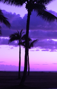 lavenders beyond the palms foto